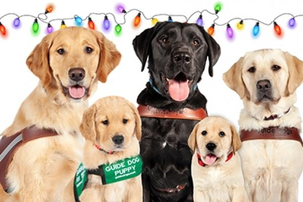 Three guide dogs and two puppies in front of a string of festive holiday lights.