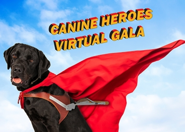 A black Lab guide dog wearing a red super hero cape against a blue sky with clouds.